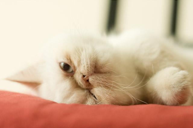 the cat - Juno