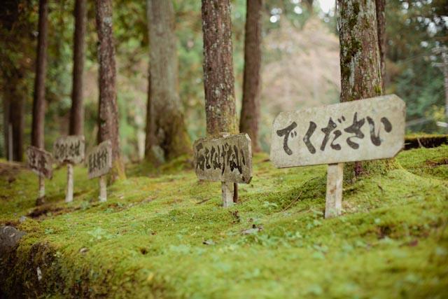 Nikko grass