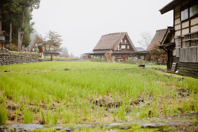 Ainokura rice fields