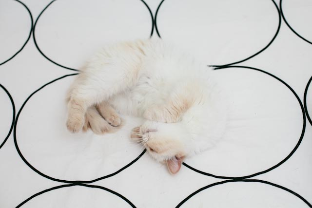Juno snowball - the cat you and us