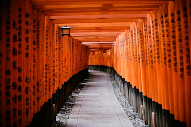 Fushimi Inari - the cat you and us
