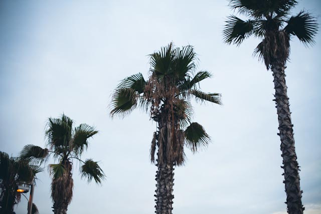palm trees - the cat, you and us