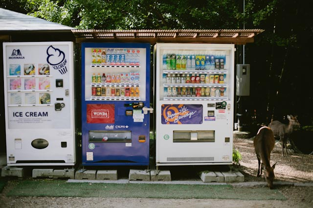 vending machines and a deer - the cat you and us