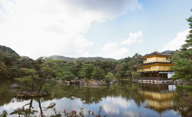 Golden pavilion - The cat, you and us