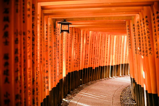 Fushimi Inari - The cat, you and us