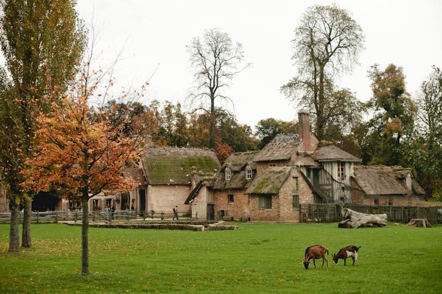 Le hameau de la reine - The cat, you and us