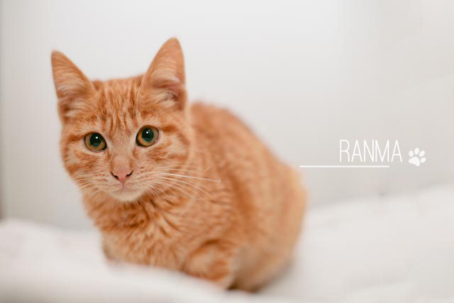 Ranma the little tabby cat - The cat, you and us