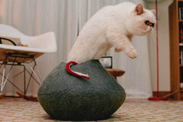 Jumping out - The cat, you and us