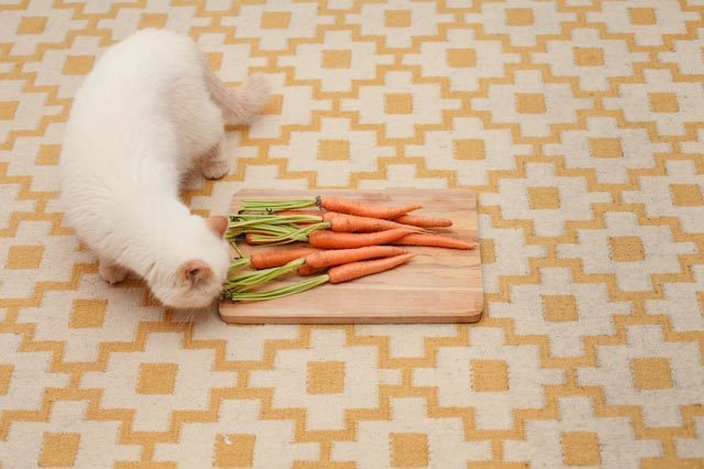 Juno and some carrots - The cat, you and us