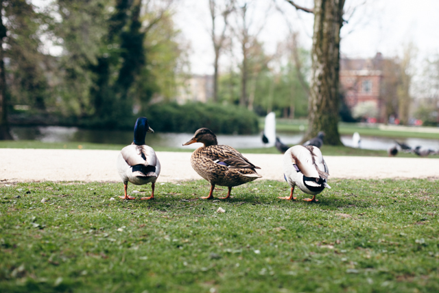 3 duck friends - The cat, you and us