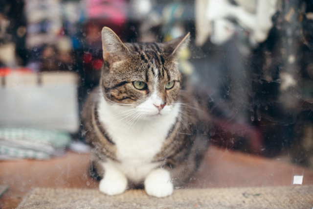Cute cat in a shop window - The cat, you and us