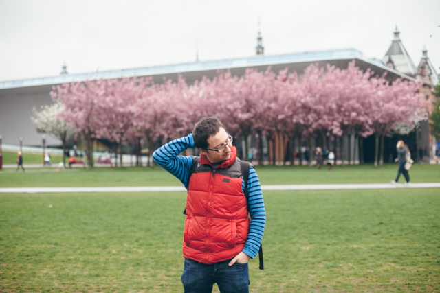 Handsome Dani gorgeous pink trees - The cat, you and us