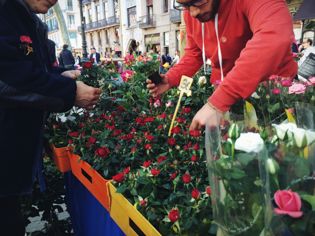 Selling roses for Sant Jordi - The cat, you and us