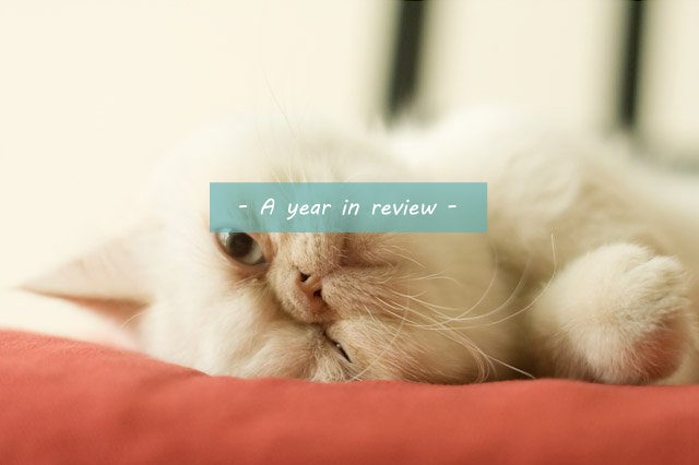 Best moments - The cat, you and us