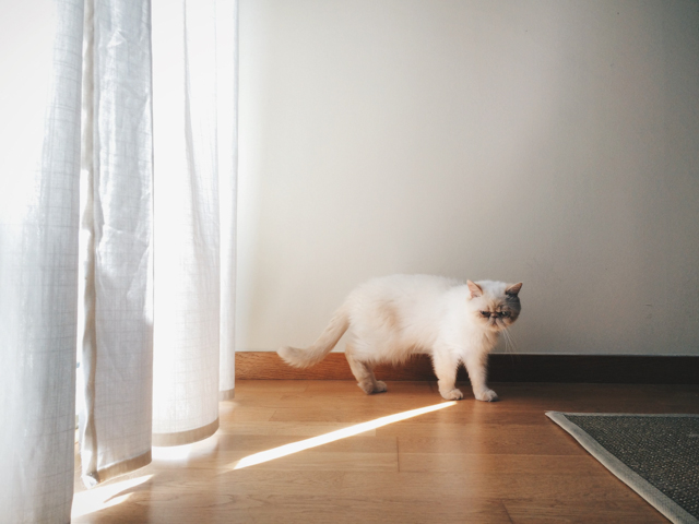 Juno chasing a light - The cat, you and us