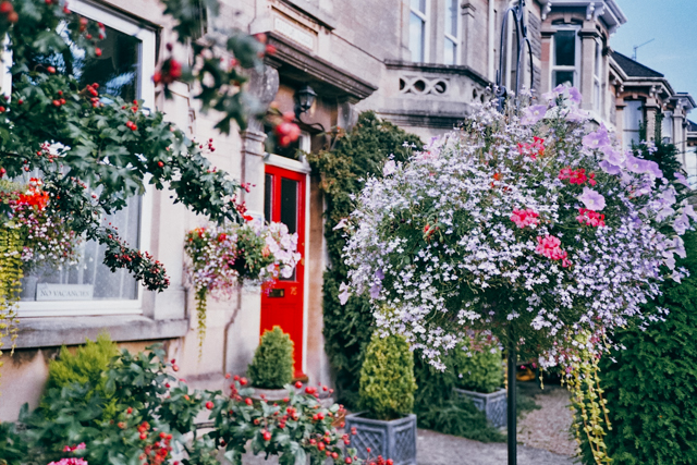 Milton House in Bath - The cat, you and us