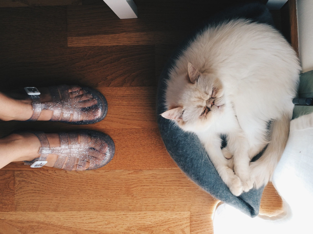 Glittery shoes and Juno - The cat, you and us
