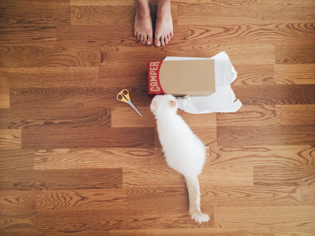 Camper box, 2 feet and a pretty white cat - The cat, you and us