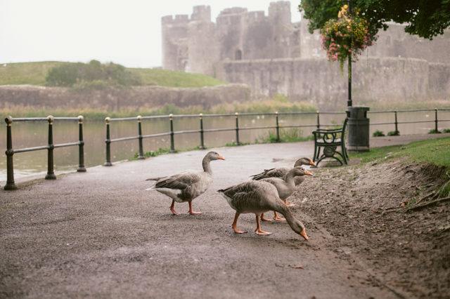Caerphilly castle - The cat, you and us