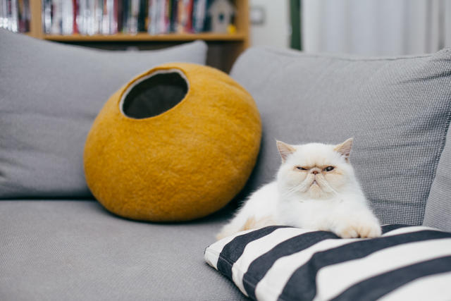 Giveaway: Win a gold comfy rronrron cat felt house - The cat, you and us