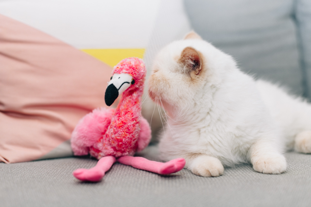 Juno and the pink flamingo - The cat, you and us