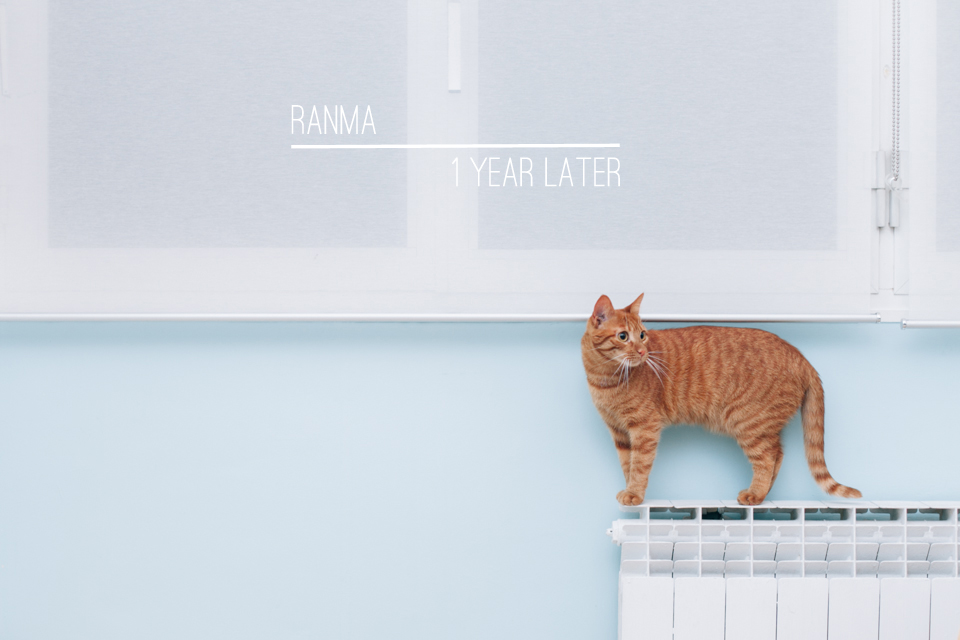Ranma - The cat, you and us