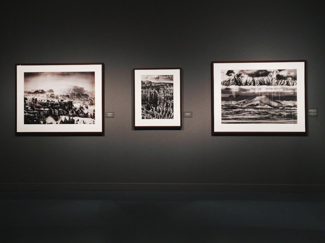 Sebastiao Salgado Caixaforum - The cat, you and us