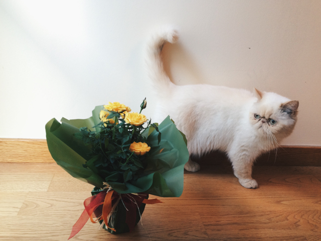 Juno & the yellow roses - The cat, you and us
