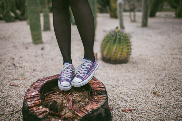 Converse & Cactus - The cat, you and us