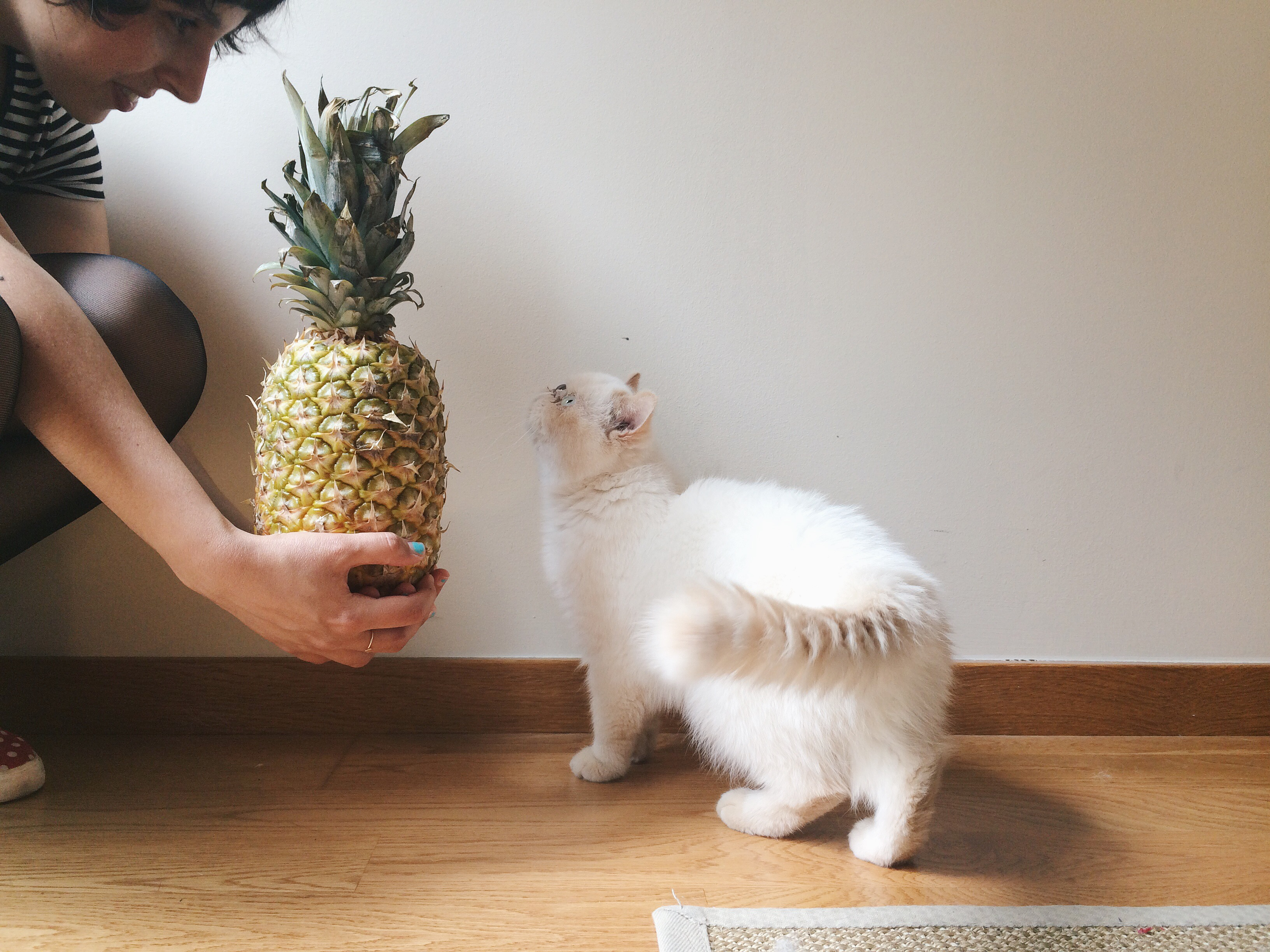 Juno and a pineapple - The cat, you and us