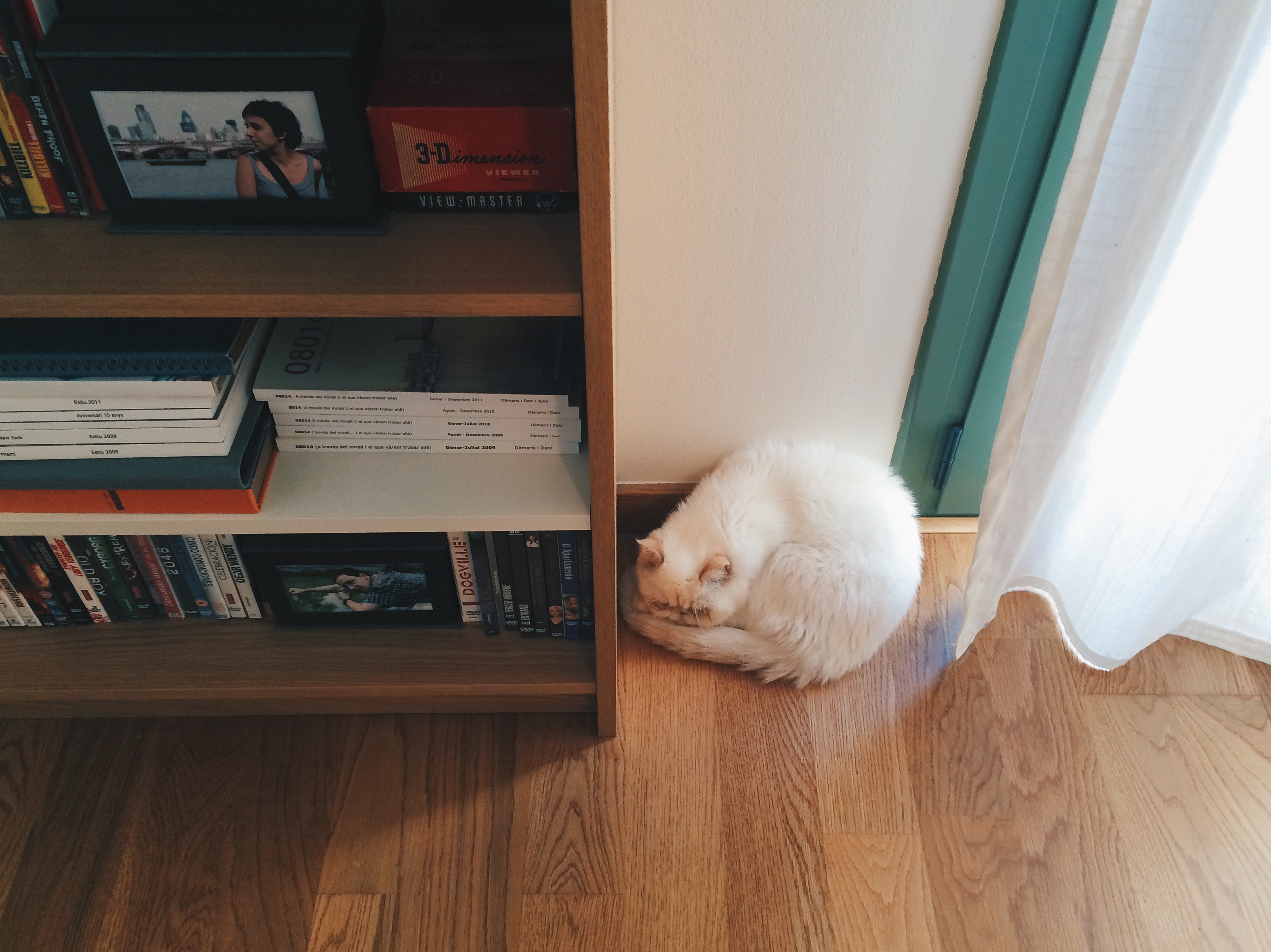 Juno the sleeping ball - The cat, you and us