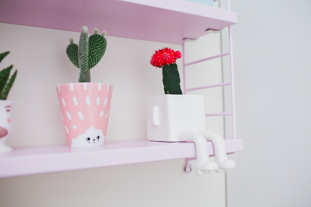 String pocket pink cactus - The cat, you and us
