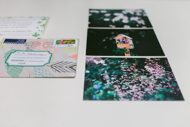 Analogue flowers photography - The cat, you and us