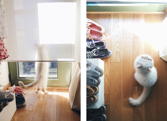 As of late snapshots from August - The cat, you and us