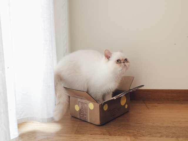 Juno in a box - The cat, you and us