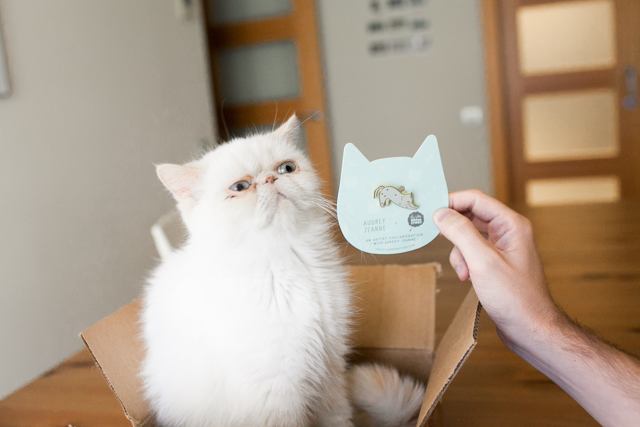 WTF cat brooch - The cat, you and us