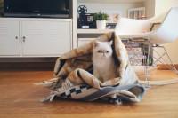 Alvine Ruta rug IKEA and Juno - The cat, you and us