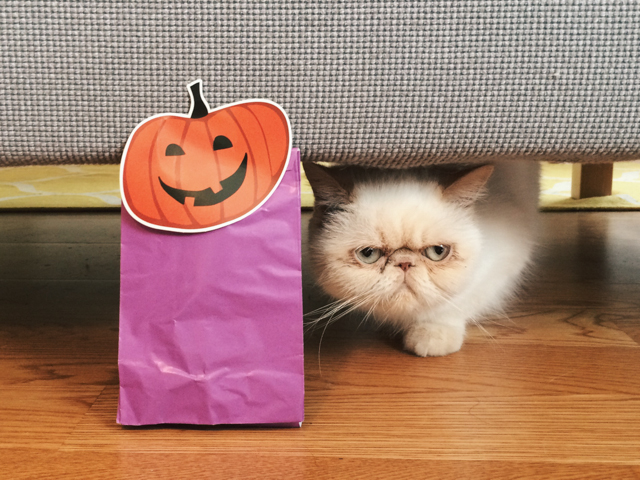Halloween and Juno - The cat, you and us