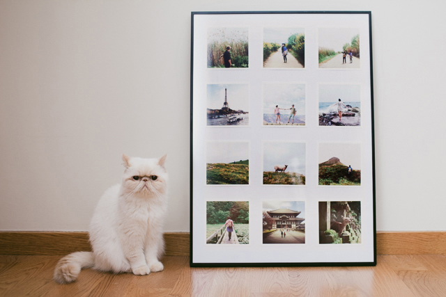 Adventures in a frame - The cat, you and us