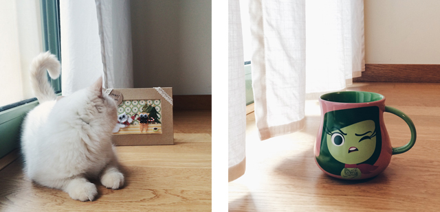 New things at home - The cat, you and us