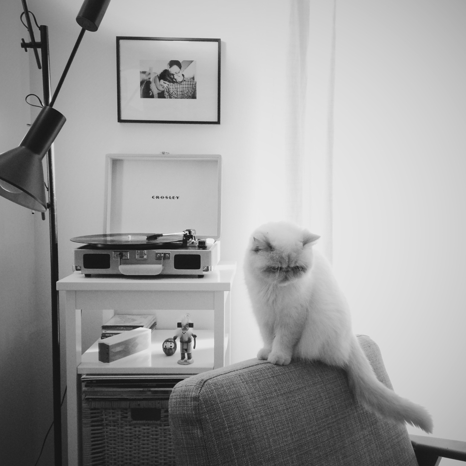 Juno listening to her Crosley turntable - The cat, you and us