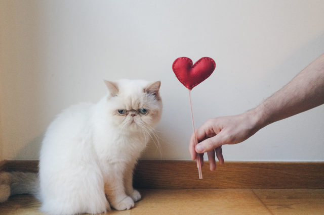 Juno Valentine's day - The cat, you and us