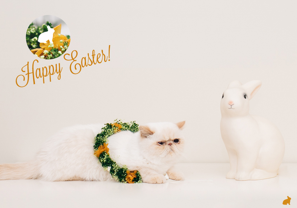 Happy Easter 2016 - The cat, you and us