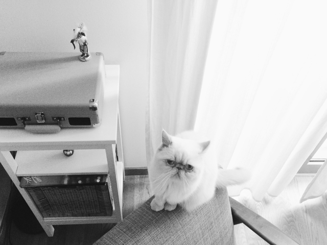 Juno B&W - The cat, you and us