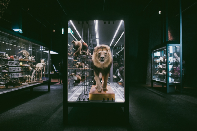 Lion Museu Blau - The cat, you and us