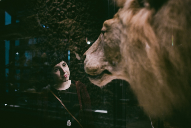 Lion - The cat, you and us