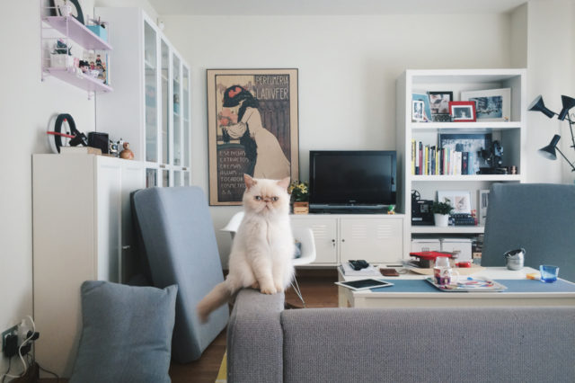 Juno home cleaning - The cat, you and us