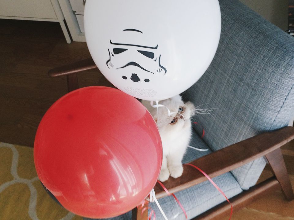 Juno and Star Wars - The cat, you and us