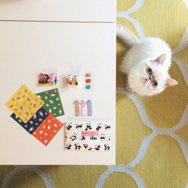 Penpal goodies and Juno - The cat, you and us