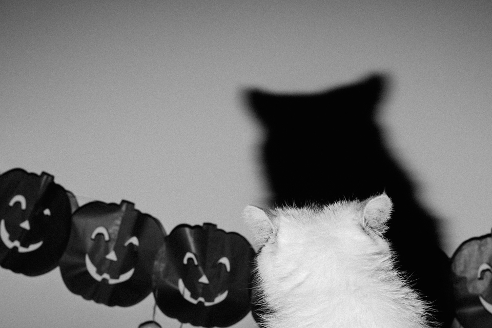 Halloween 2016 - The cat, you and us
